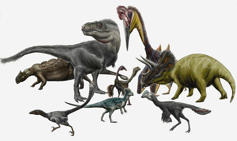 Afbeeldingsresultaat voor soorten dinosaurussen