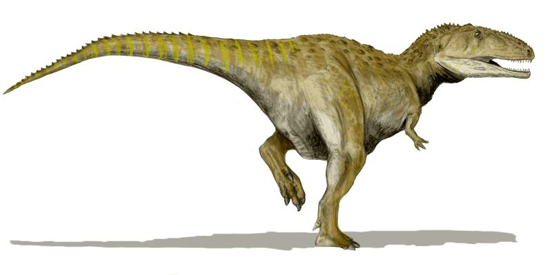 Megalossaurus