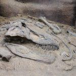 Paleontoloog