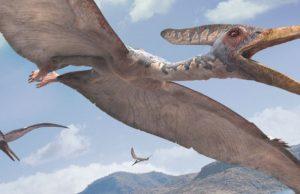 Pternanodon