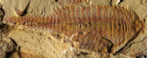 Paleontologen
